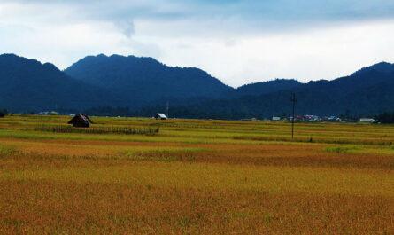 Ziro Valley Arunachal