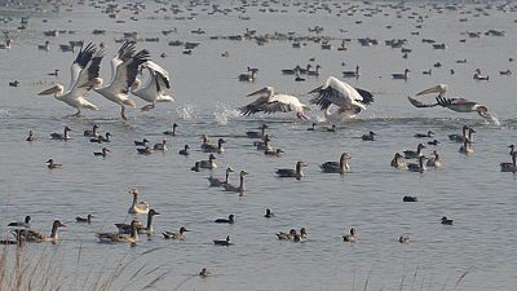 Patna Vihar Bird Sanctuary Etah