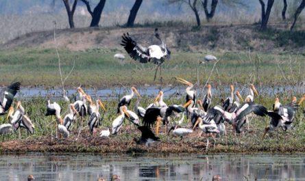 sandi bird sanctuary